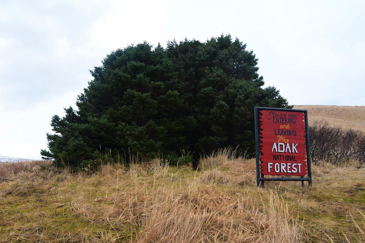 La forêt d'Adak, par le chouette Paxson Woelber en 2015 / paxsonwoelber.com